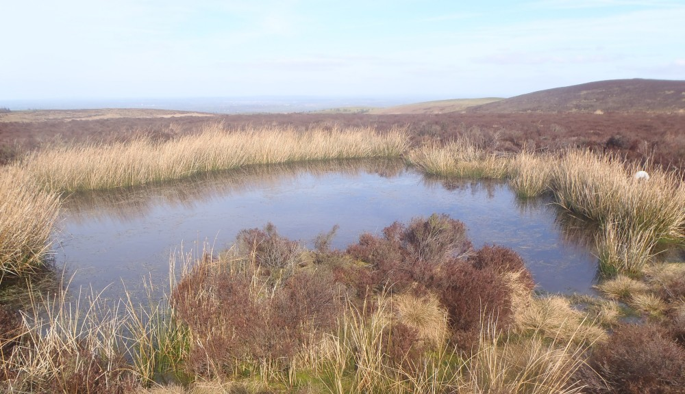 Acidic pool on Long Mynd